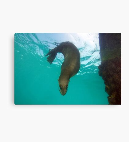 Question Is Canvas Print