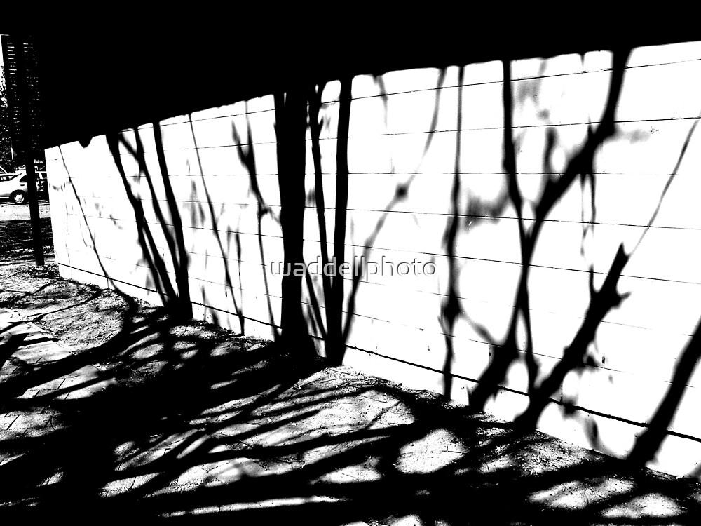 Shadows by waddellphoto