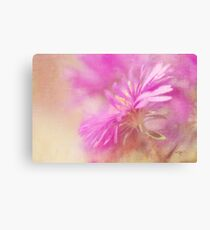 Dewy Pink Asters Canvas Print