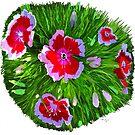 Dianthus by Karen Harding