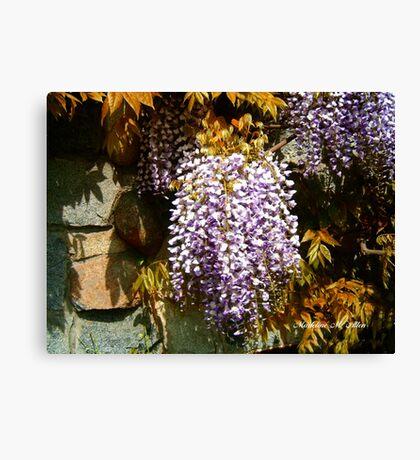 Wisteria Clinging Vine Canvas Print