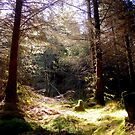 The heart of the forest by mikebov