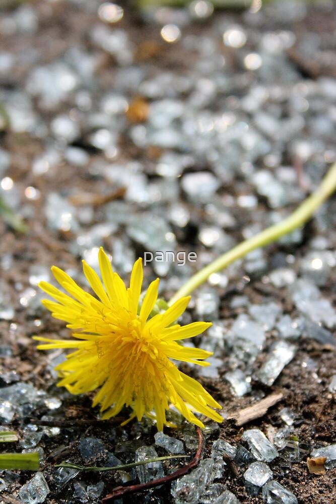 A Dandelion Among Glass by pange