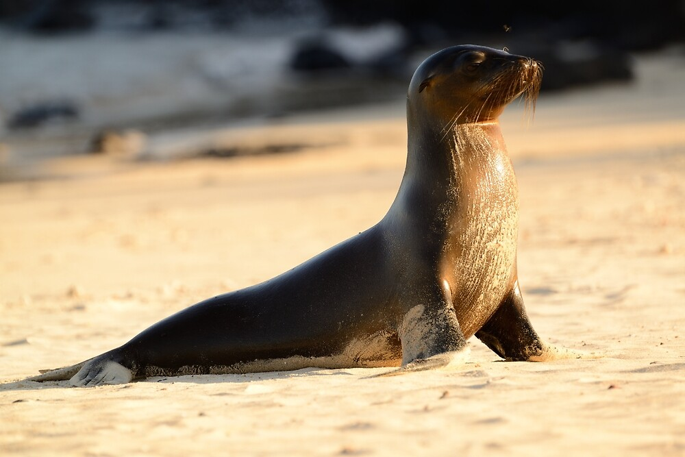 Wet sea lion by Derek McMorrine
