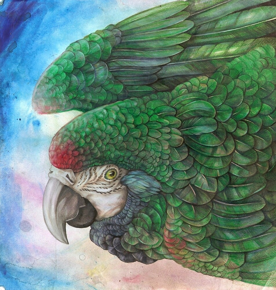 Macaw by Dawn Paws