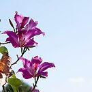Hong Kong Orchid by Donna Adamski