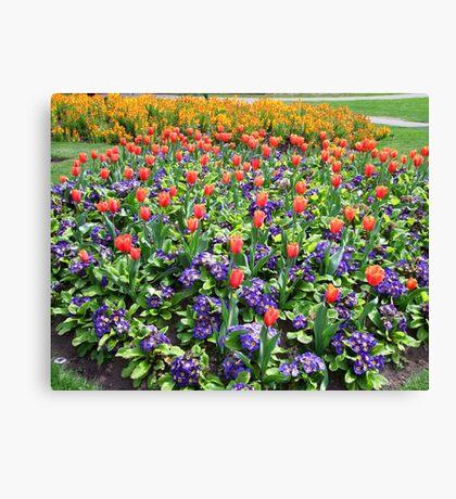 Tulips On Display (2) Canvas Print