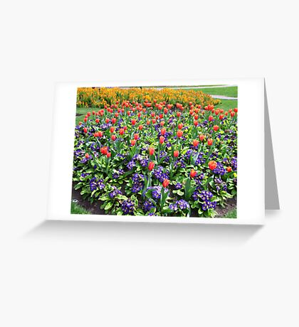 Tulips On Display (2) Greeting Card