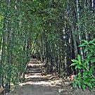 Bamboo Walk by Margaret Stevens