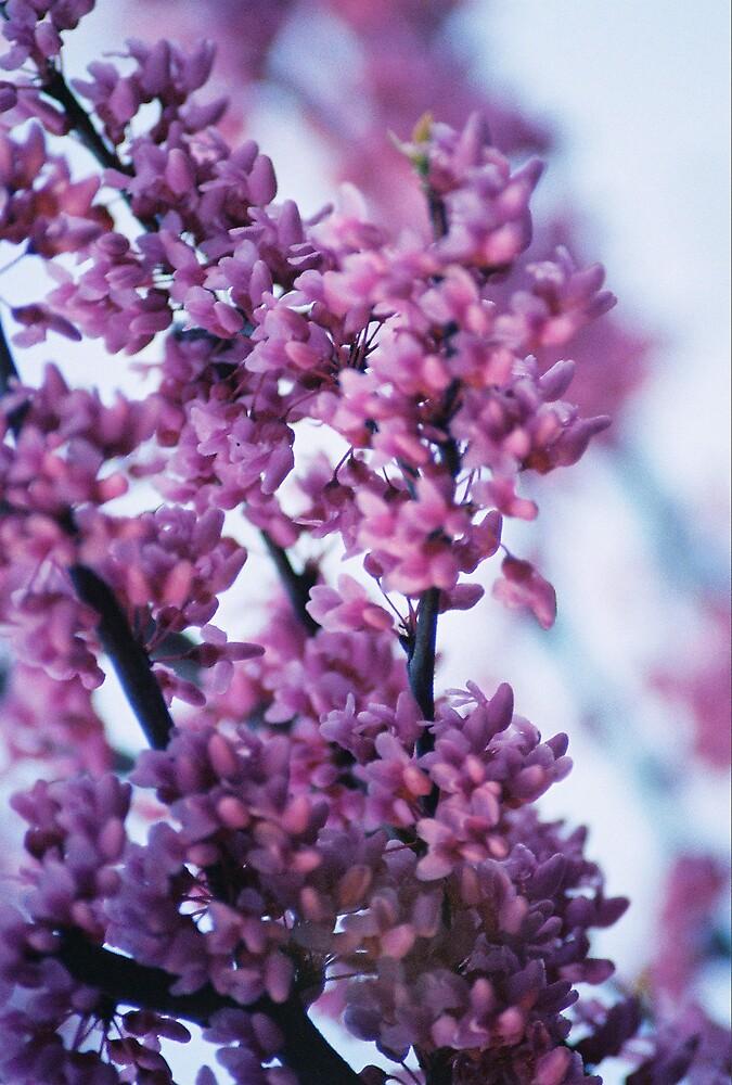 Full Bloom 2 by Kerrie Simms