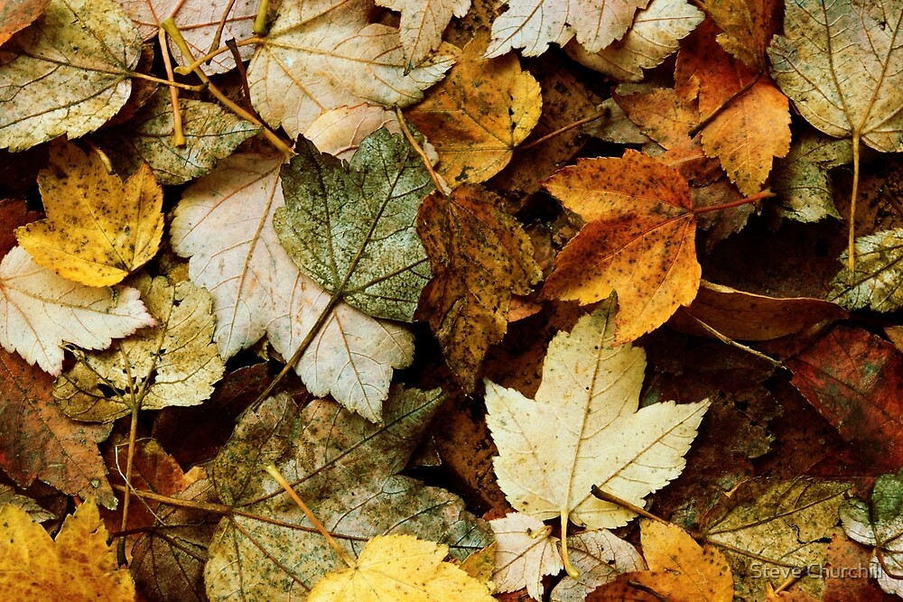 Autumn Leaves by Steve Churchill