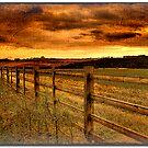 Fencing by Martyn Starkey