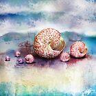 sea shells by © Karin Taylor