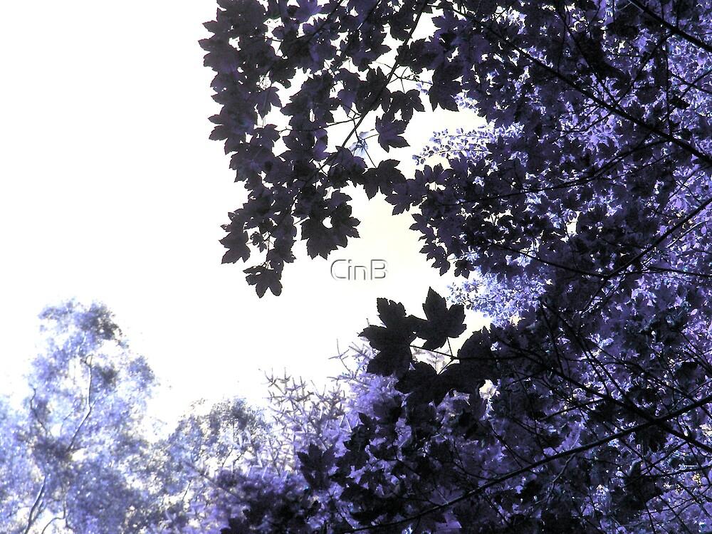 Purple Haze by CinB