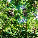 Fan palm forest by David Wachenfeld
