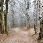 Another hoarfrosted forest impression by jchanders