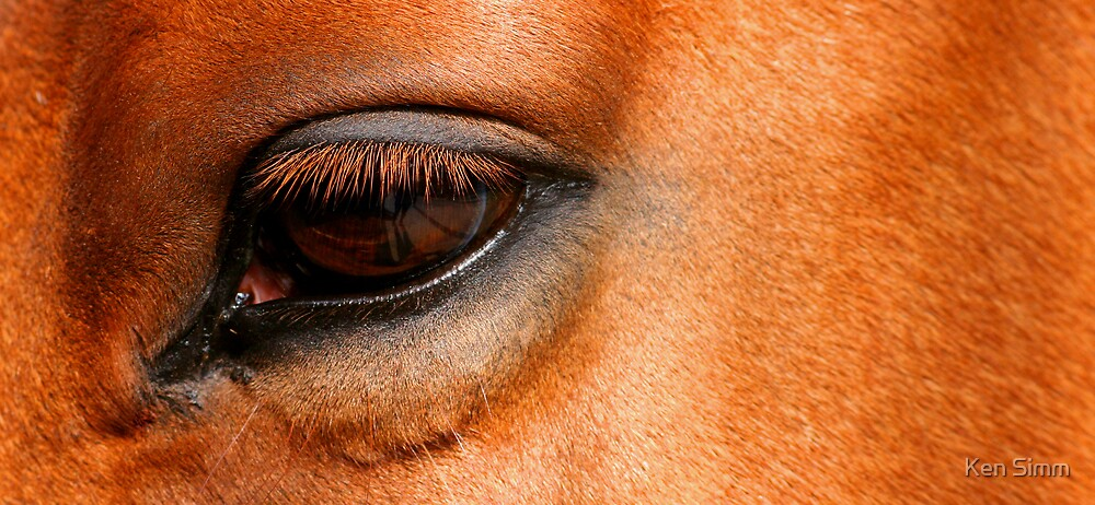 Horse by Kenart