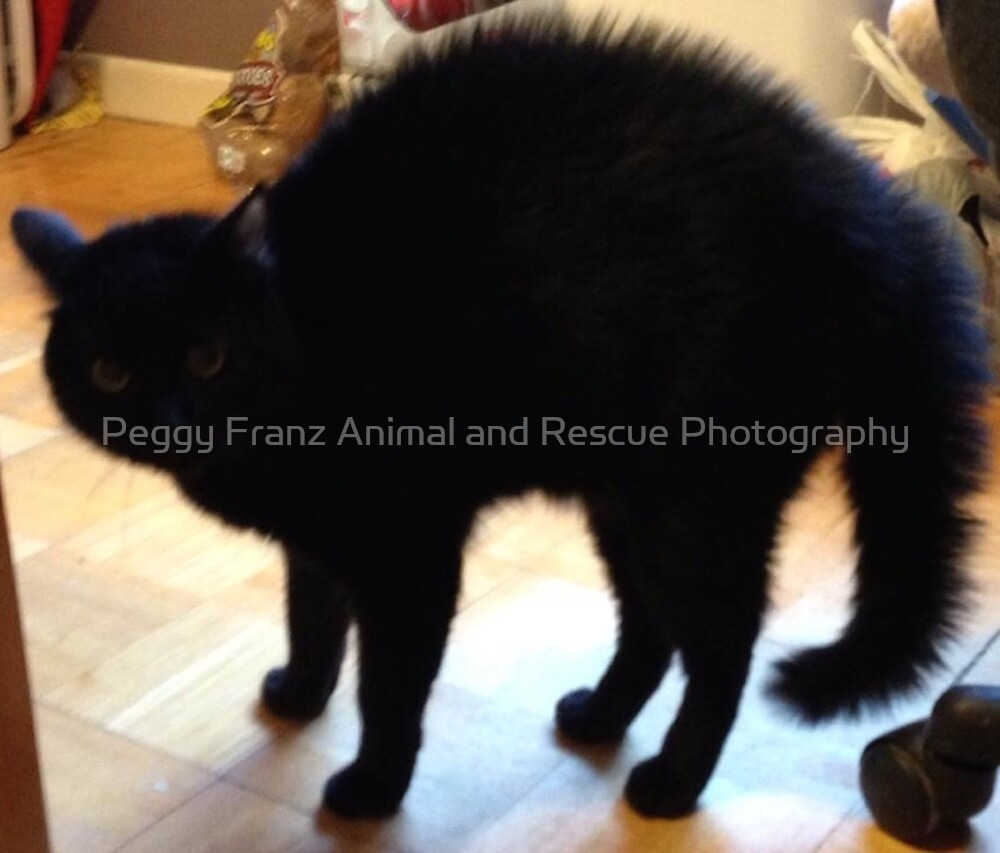 Mr. Mister  Personal Request by Peggy Franz Animal and Rescue Photography