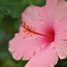 Bloom by leegee
