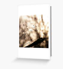 .: Sunday, lazy sunday :. Greeting Card