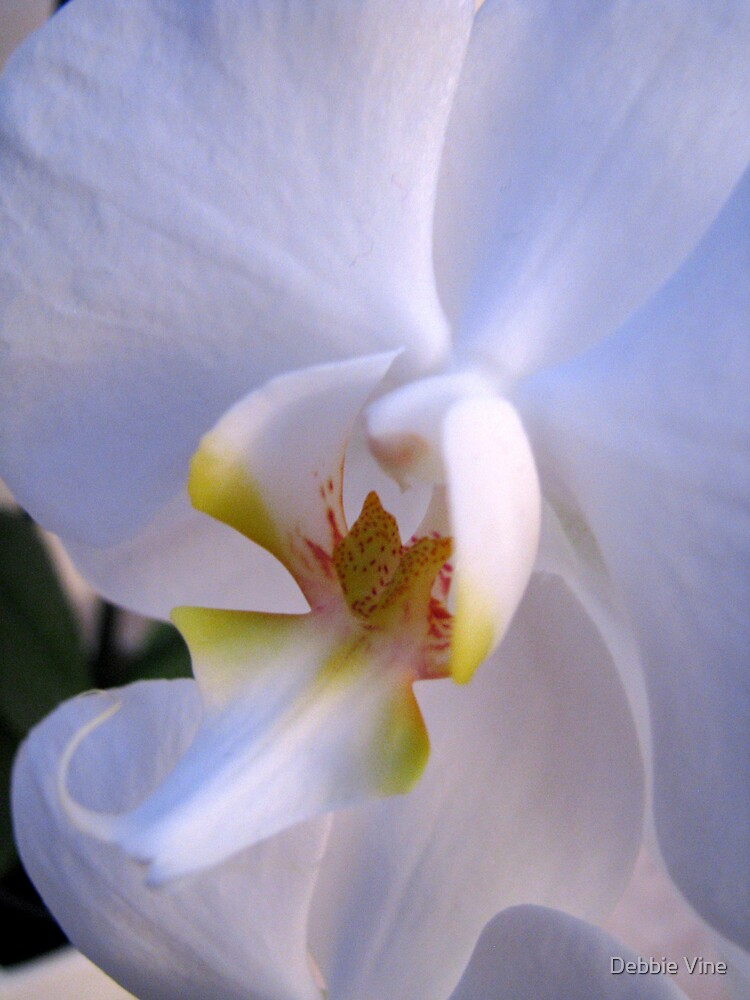 Lone Orchid by Debbie Vine