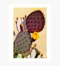 Opuntia macrocentra Art Print