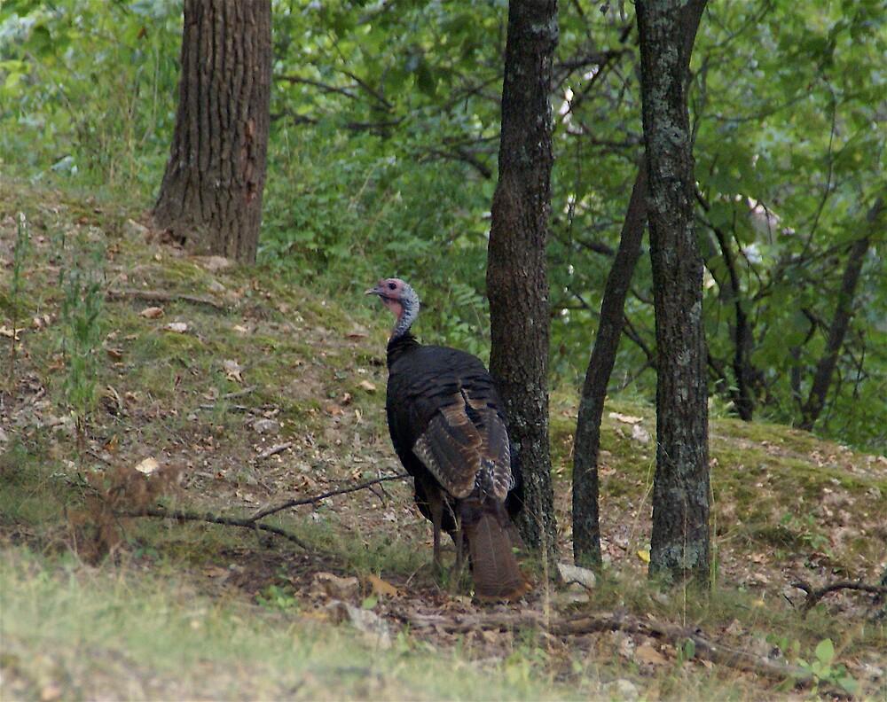 Wild Turkey 2 by Jim Caldwell