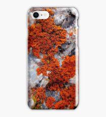 Orange Lichen iPhone Case/Skin