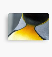 King Penguin Collar Canvas Print