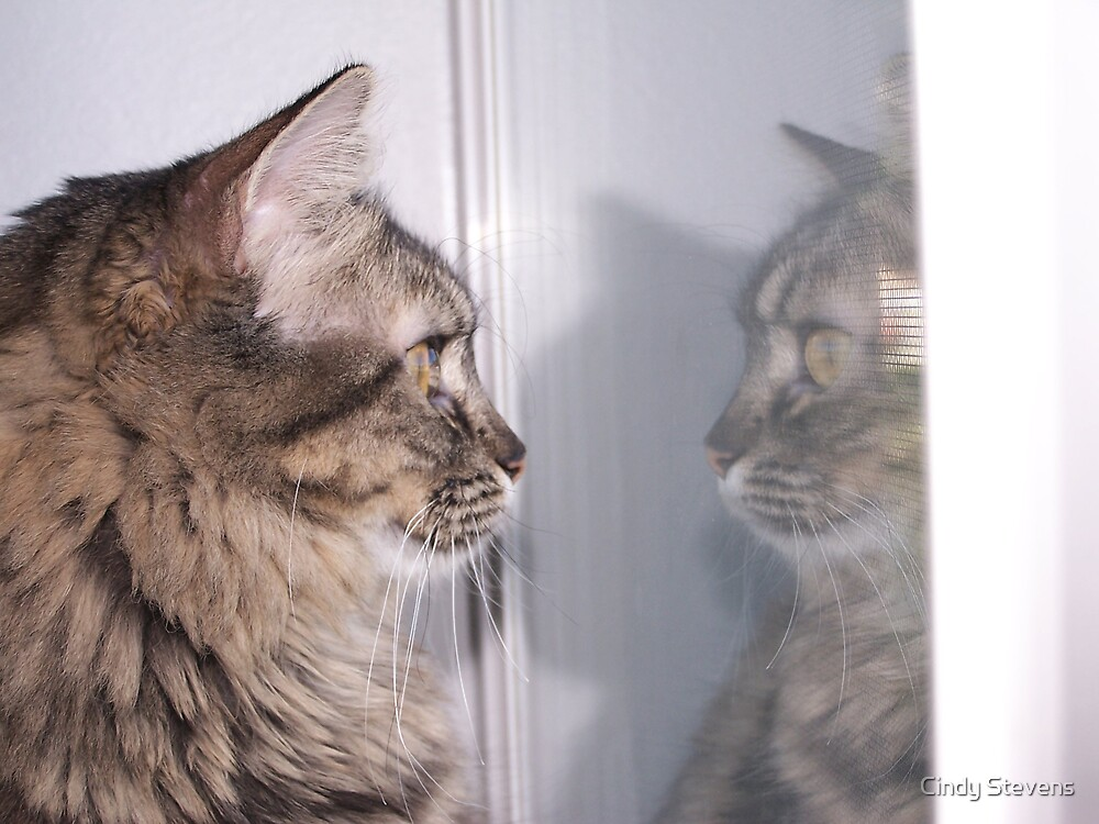 Reflections of Kitty by Cindy Stevens