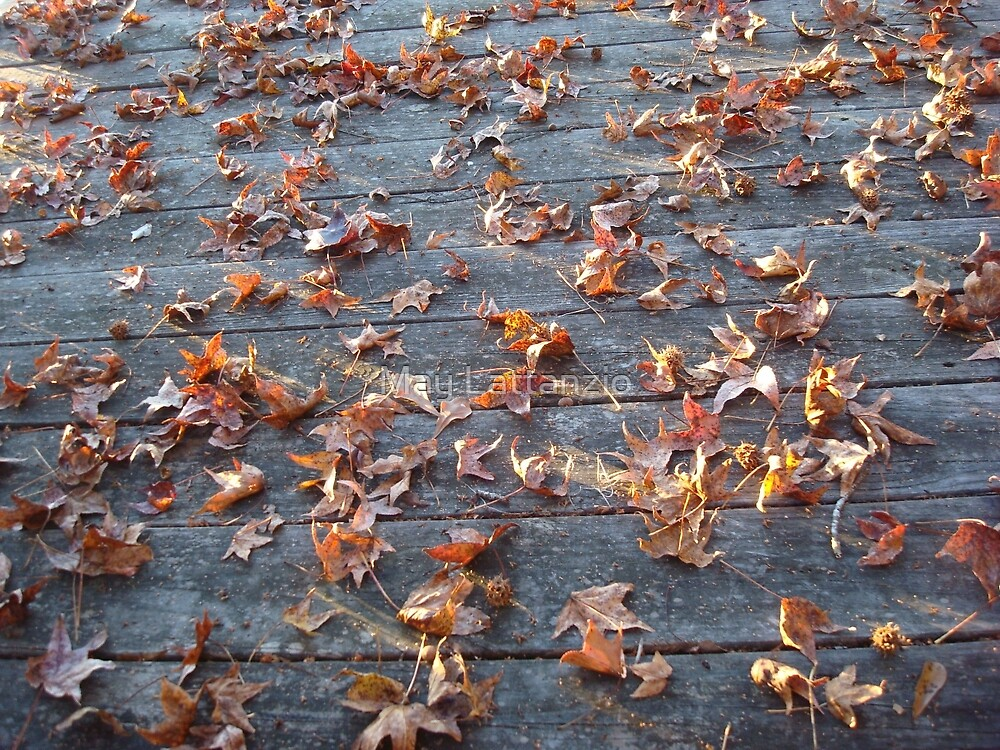 """This is why they call """"Autumn"""", """"Fall""""! by May Lattanzio"""