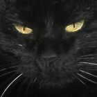 Black Cat by Karl Eschenbach