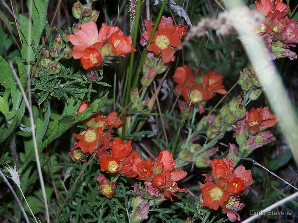 Mountain Meadow Buds by Cindy Stevens