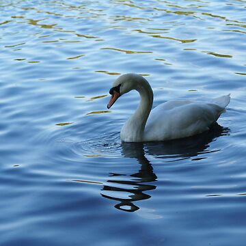 Swan by jebus