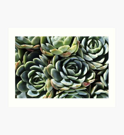 World Of The Succulent Art Print