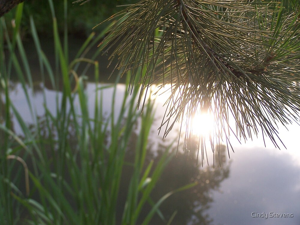 Reflections in the stream by Cindy Stevens