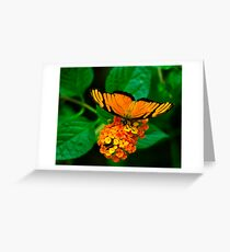 Banded-orange butterfly Greeting Card