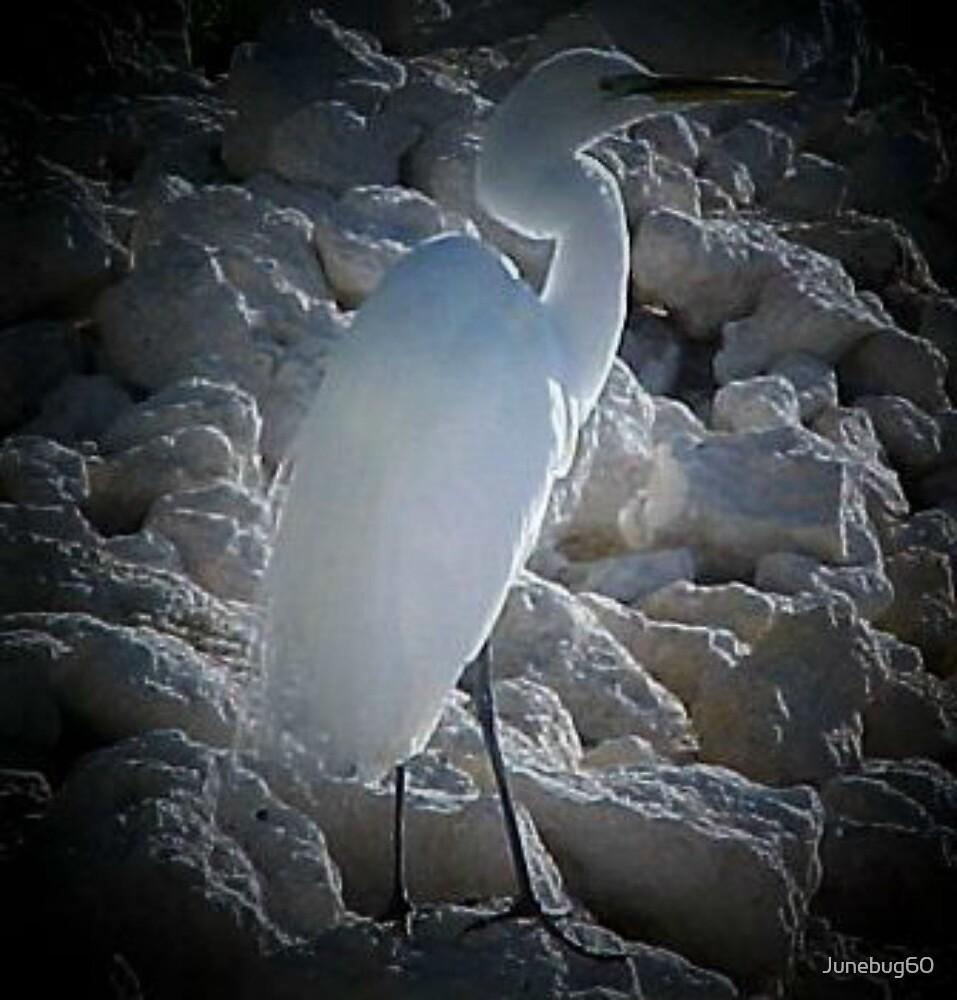 White Egret by Junebug60