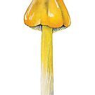 Hygrocybe singeri (Witch's Hat Mushroom) by lifescience