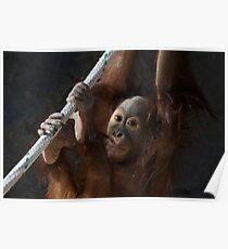 Baby Orangutang Poster