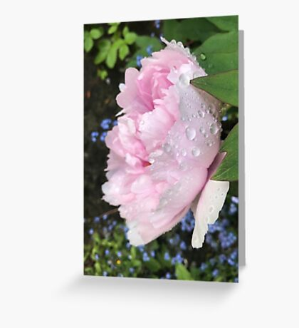 Peony after the Rain 1 Greeting Card