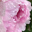 Peony after the Rain 4 by Christine  Wilson