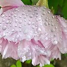 Pink Peony after the Rain by Christine  Wilson