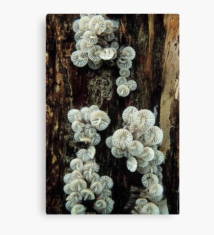 Mycena Fungi II Canvas Print