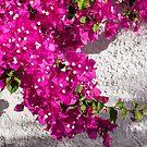 Papery Pink Riot by Georgia Mizuleva