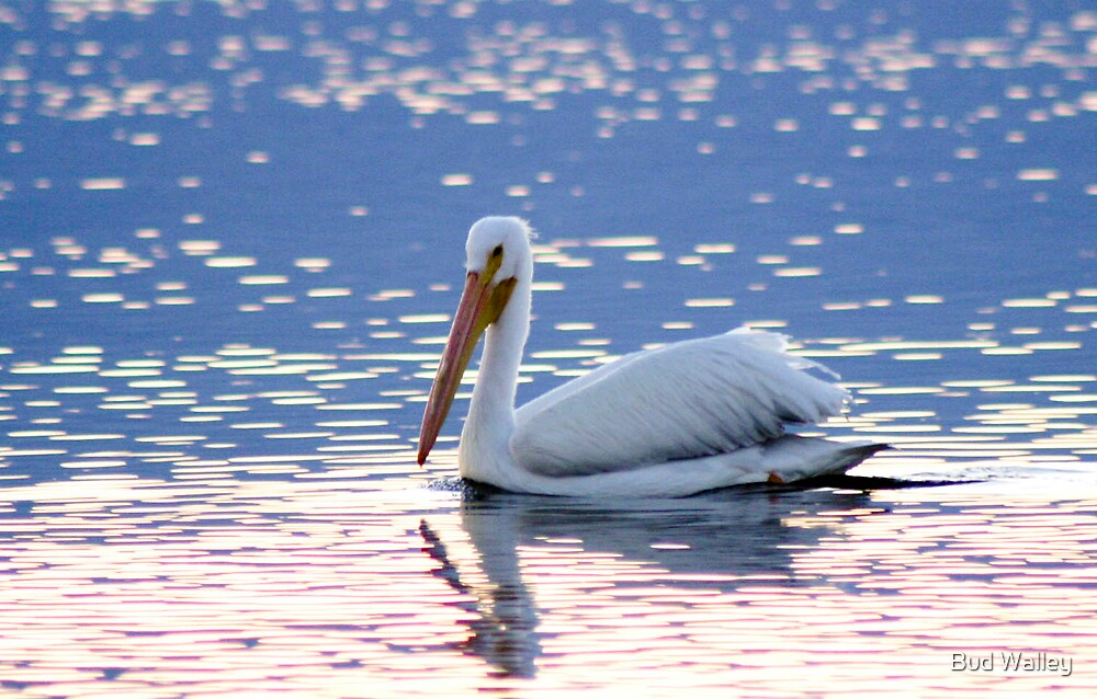 Pelican on the Water by Bud Walley