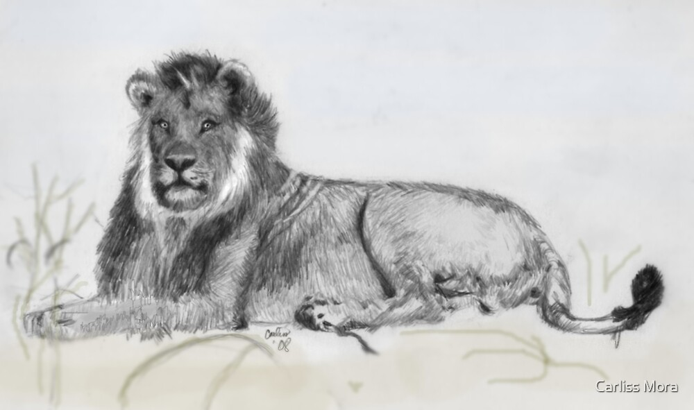 Lion Lounging Around by Carliss Mora