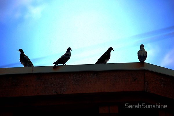 Shadowed Birds by SarahSunshine