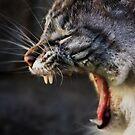 Screamer by Derek Flynn