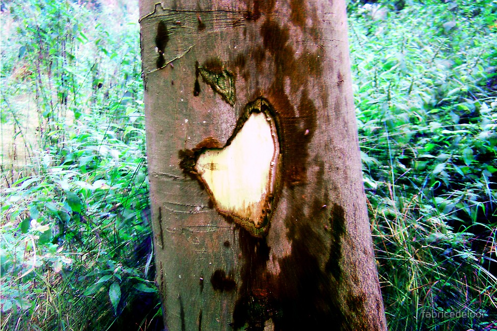 Who said the trees had no heart? by fabricedeloor